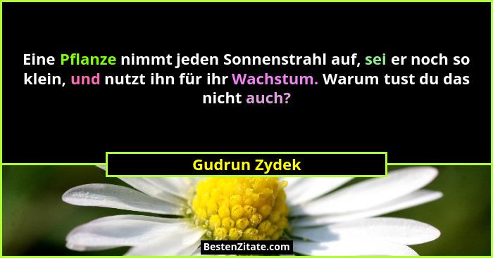 Eine Pflanze nimmt jeden Sonnenstrahl auf, sei er noch so klein, und nutzt ihn für ihr Wachstum. Warum tust du das nicht auch?... - Gudrun Zydek